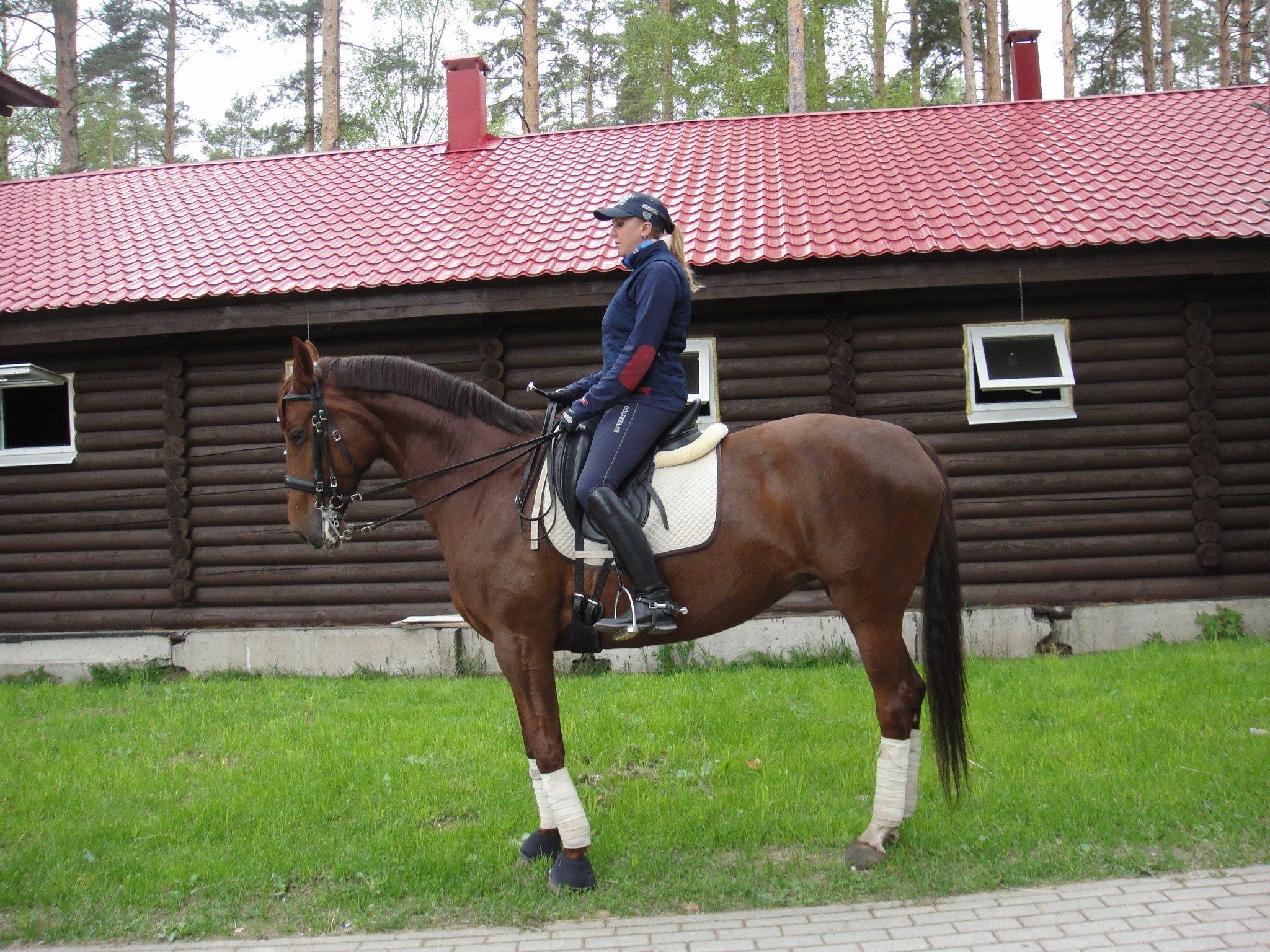Договор купли-продажи лошади между физическими лицами